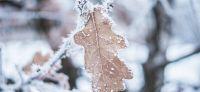 04_winter_im_garten