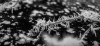 05_winter_im_garten
